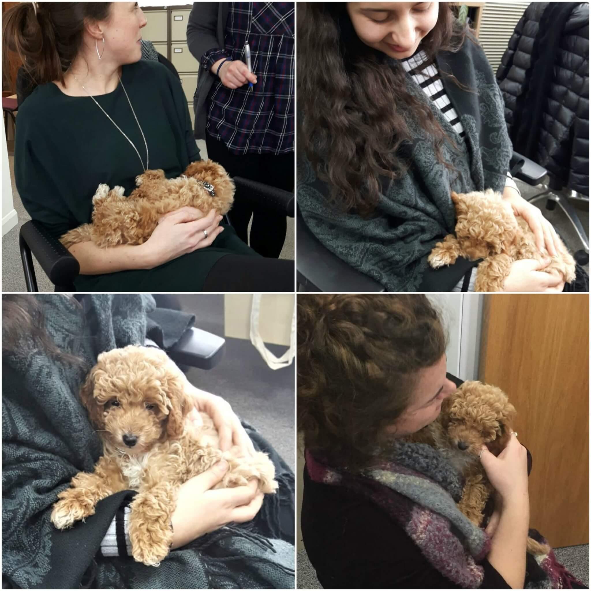 Surrey Translation Bureau puppy